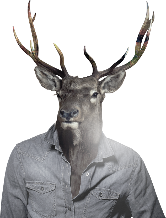 big-stag